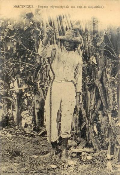 Chasseur de serpents -Trigonocéphaie en voie de disparition) édition Phos-Guadeloupe - Cliquez sur la carte pour l'agrandir et en voir tous les détails