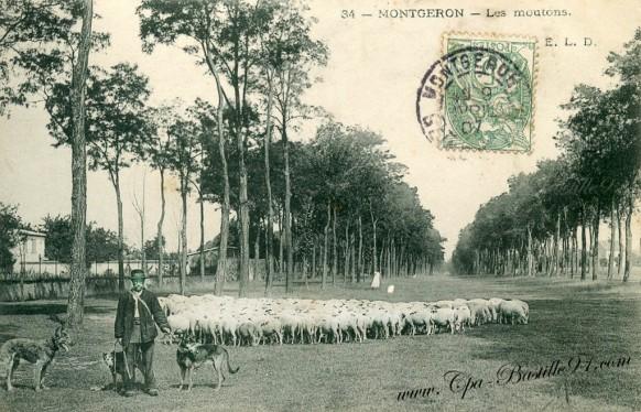 91- Montgeron-les Moutons-editeur ELD