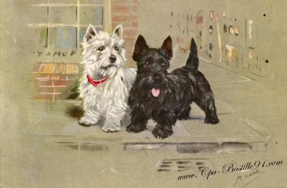 carte postale ancienne-deux petits chiens noir et blanc