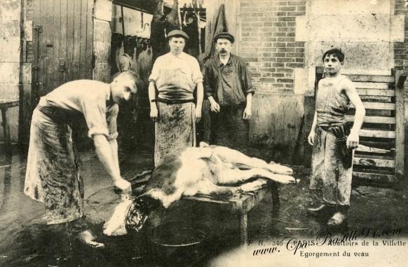 Abattoirs-de-la-villette-égorgement-du-veau