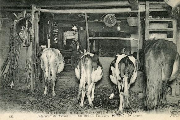 Coutumes-bretonnes-interieur-de-Ferme-avec-vaches