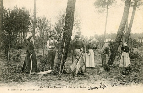 Landes - Derniere récolte de la résine - Le Barrascot