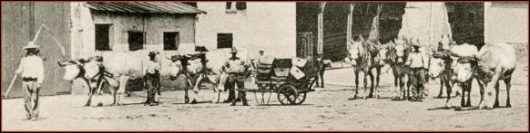 Détail ferme de Noiseau - Attelages de Boeufs