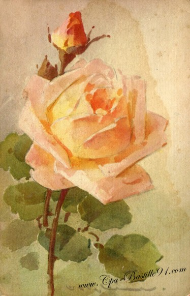 vente site fleurs klein231