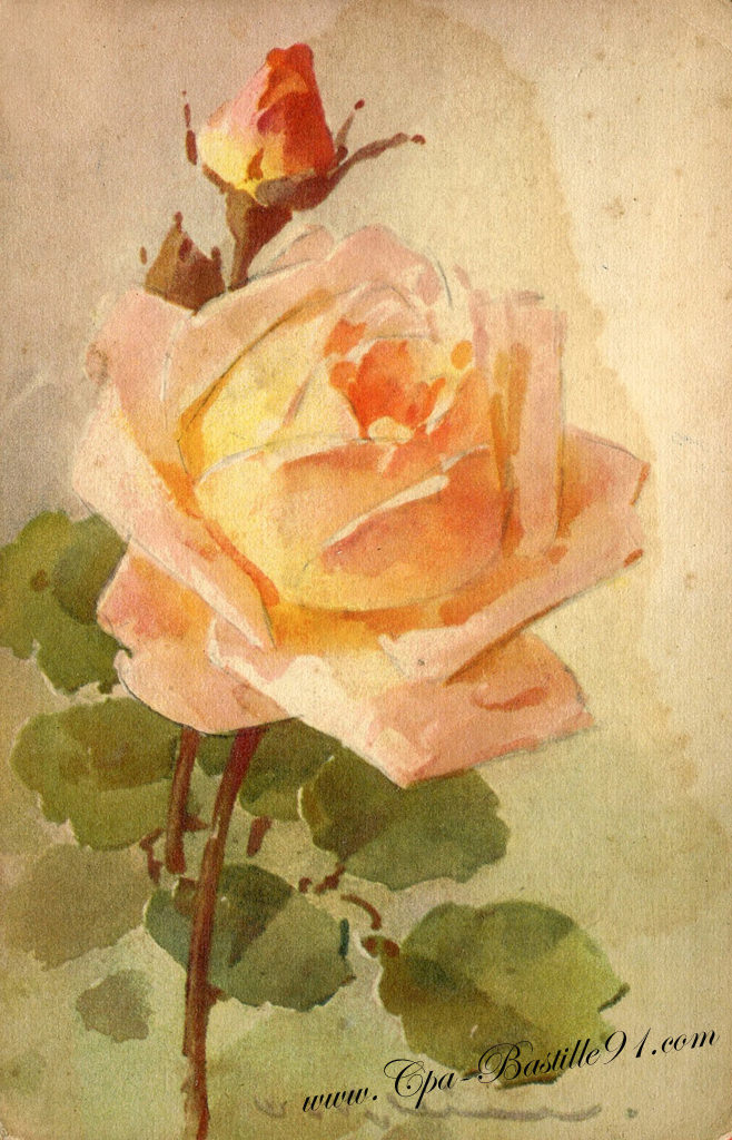 Aquarelle les roses de catharina klein cartes postales for Fleurs vente