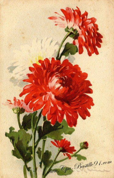 Le Bouquet de DAHLIA signée Catharina KLEIN