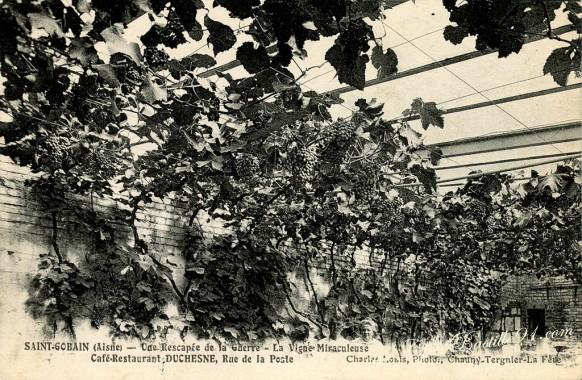 Saint-Gobain-Une-rescapé-de-la-guerre-La-vigne-Miraculeuse