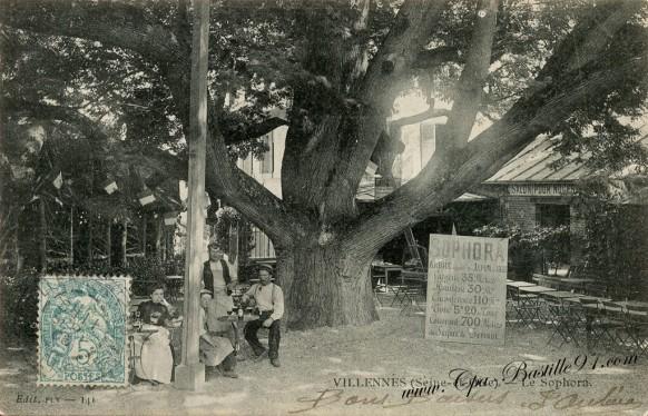 Carte Postale Ancienne de Villennes - Le Sophora