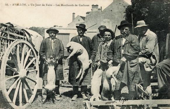 Carte Postale Ancienne - Avallon - Un jour de foire - Les Marchands de cochons