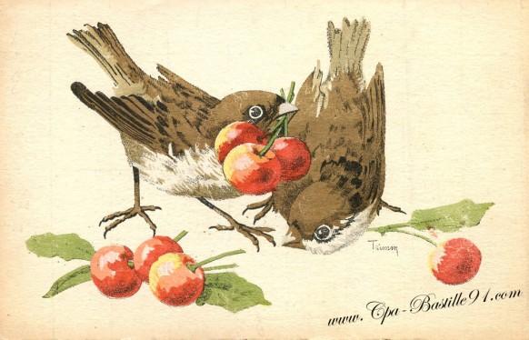 Carte postale ancienne - les oiseaux aux cerises de l'illustrateur Trimm