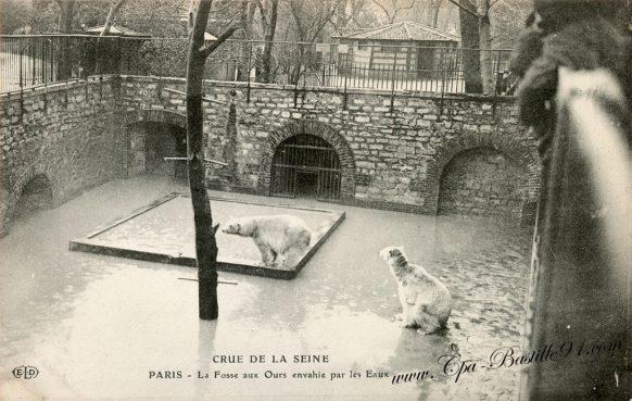 Carte postale Ancienne - Crue de la seine de 1910 - Paris la fosse aux ours envahie par les eaux