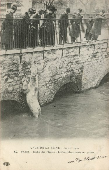 Crue de la Seine - janvier 1910 - Paris le Jardin des plantes - l'Ours Blanc conte ses peines