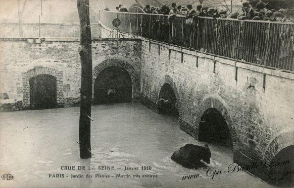 Crue de la Seine en Janvier 1910 - Paris le jardin des plantes - l'Ours Martin très ennuyé