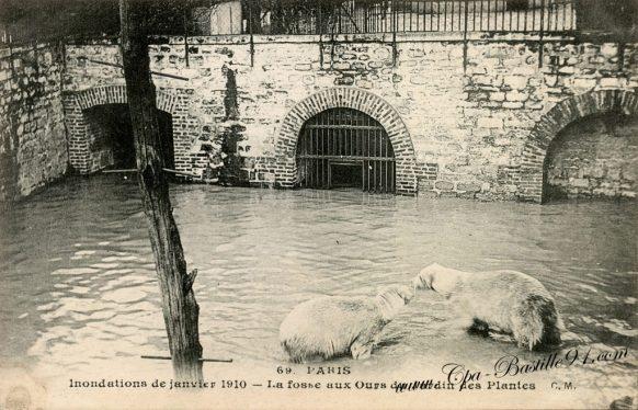 Paris - l'Inondations de janvier 1910 - La fosse aux Ours du jardin des Plantes