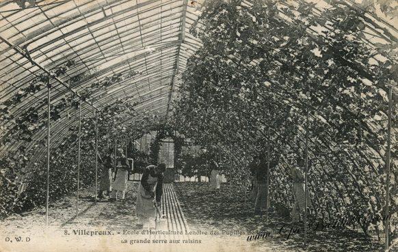 Carte Postale Ancienne - Villepreux - l'école d'Horticulture