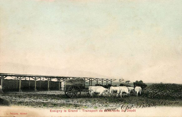 Carte- Postale Ancienne d'Essigny-le-Grand - le Transport de betteraves au dépôt en 1910