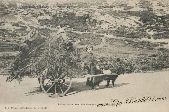 Attelage de chien sur l'ile de Saint Pierre et Miquelon